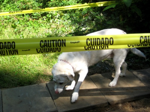 caution-dog