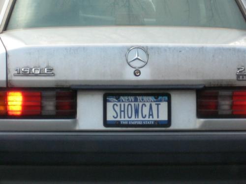 show-cat