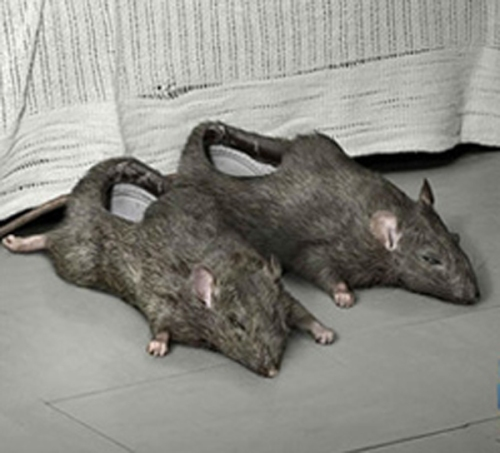 rat-slippers